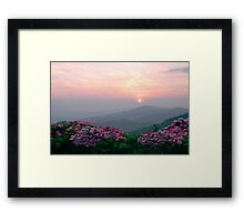 Rhododendron Sunrise Framed Print