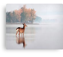 Young Buck - Ottawa River, Dunrobin Ontario Canvas Print