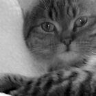 Dreamy cat by weecritter