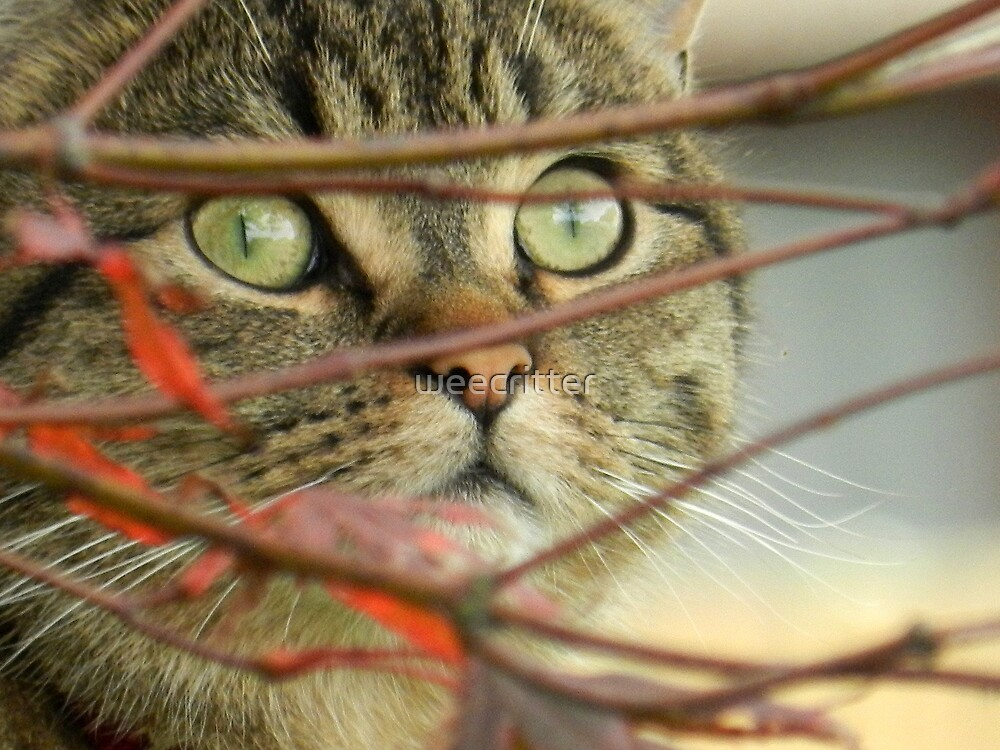 Do you think the birds can see me? by weecritter