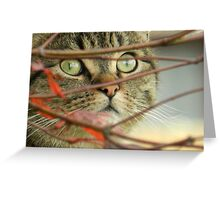 Do you think the birds can see me? Greeting Card