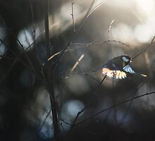Humming Bird Taking Off into the Sun by Petr Salaba