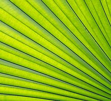 Exotic Giant Leaf by Sally P  Moore