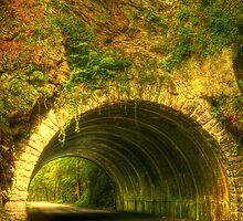 Tunnel in the Woods by Susan  Kimball