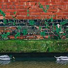 Canal Ducks by daverives