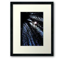 Palm rays Framed Print