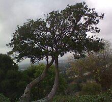 Mary Crest Tree at Dusk by shaina