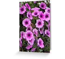 """music glamour"" petunias Greeting Card"