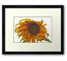 sunflower bad hair day Framed Print