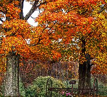 Adirondack Autumn Beauty by Diane E. Berry
