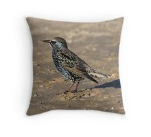Starling on the beach Throw Pillow