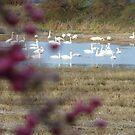 Swan Lake by Fara
