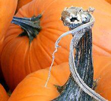 Pumpkin Twist by MarjorieB