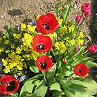 Colourful Corner - Vibrant Red and Pink Tulips by MidnightMelody