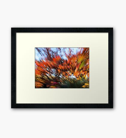 The Front Yard #2 Framed Print
