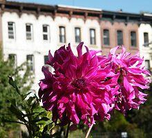September Jersey City, New Jersey, Flower Close-Up, Van Vorst Park by lenspiro