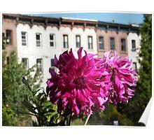 September Jersey City, New Jersey, Flower Close-Up, Van Vorst Park Poster