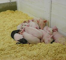 A Real Pig Pile! by MaryinMaine
