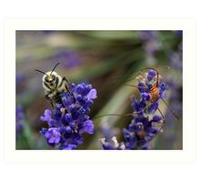 Bumble Bee and a Daddy Long-Leg Art Print