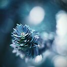 Monkey Puzzle by BPhotographer
