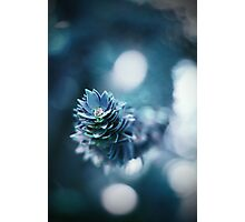 Monkey Puzzle Photographic Print