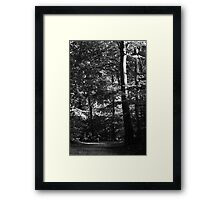 Running through the trees ... Framed Print