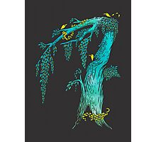 Tree Birds Photographic Print