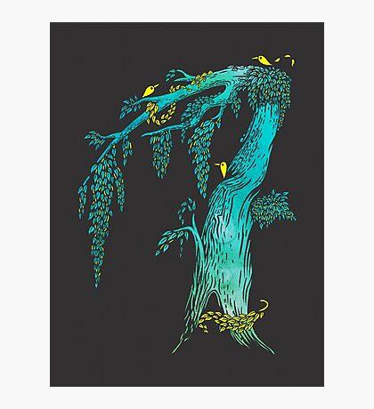 Tree Birds Photographic Print