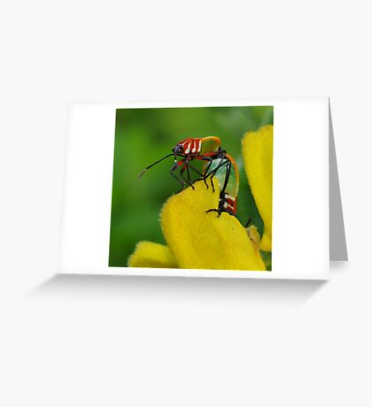 It's a bug's life ~ Greeting Card