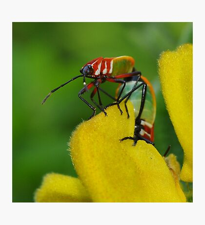 It's a bug's life ~ Photographic Print