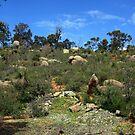 John Forrest National Park III by Catherine Liversidge