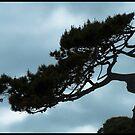 A tree ... by jean-jean