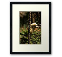 Searching the world Framed Print