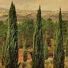 Straight and Tall-San Galgano, Italy by Deborah Downes