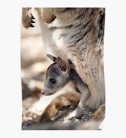 Checking it out - joey in the pouch  Poster