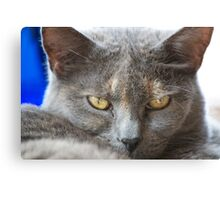 'IF LOOKS COULD KILL' Canvas Print