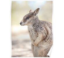 Mareeba rock wallaby Poster