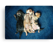 Just being this cute is completely exhausting! Canvas Print