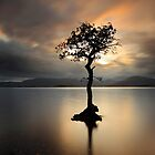 Lone tree on Loch Lomond by Grant Glendinning