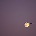 flying o&#x27;er the moon by lucy loomis