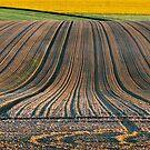 Sunrise ploughed fields       by Victor Pugatschew