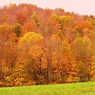 fall at its best by natnvinmom