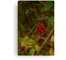 Wild Berries in Forest Canvas Print