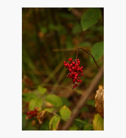 Wild Berries in Forest Photographic Print