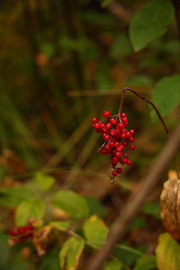 Wild Berries in Forest by Thomas Murphy