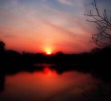 True Beauty in a Sunset © by Dawn M. Becker