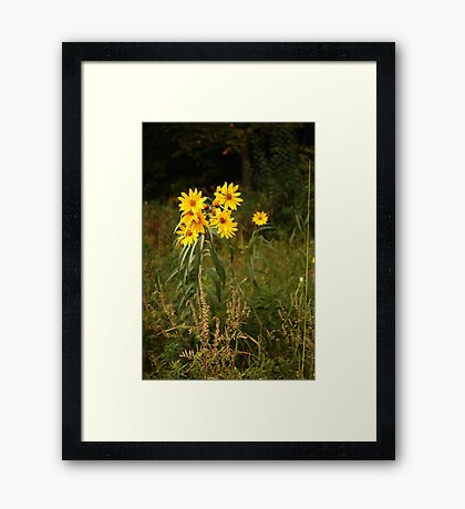 Wild Yellow Flower Framed Print