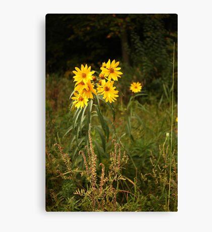 Wild Yellow Flower Canvas Print