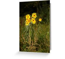 Wild Yellow Flower Greeting Card