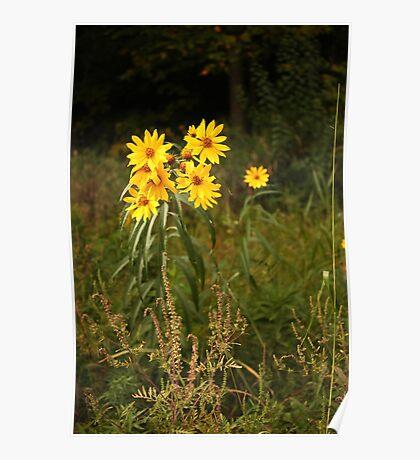 Wild Yellow Flower Poster